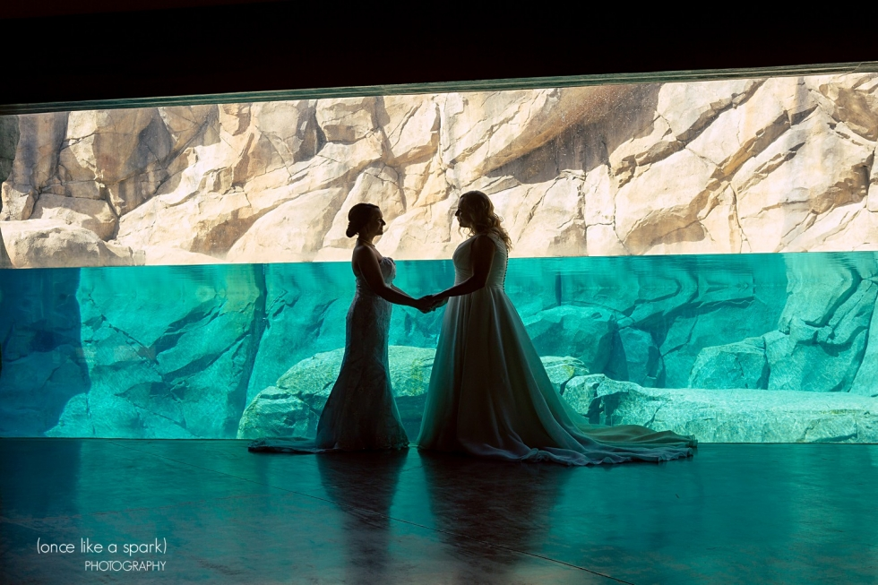 Brookfield Zoo Wedding Wedding Photography
